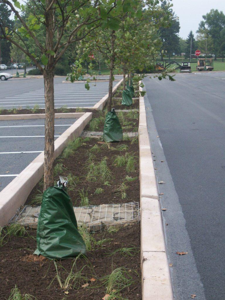 Street Trees   Save It!