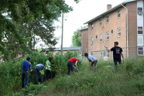 PSSI students work to clear invasive plants from Franklin Terrace.